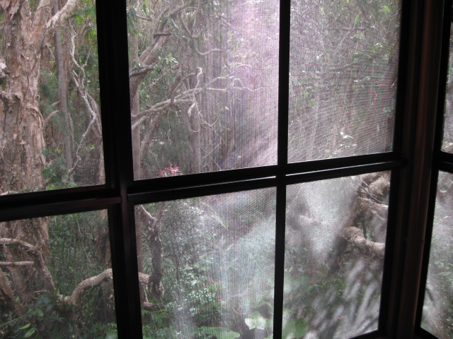 View into rainforest